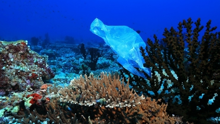 The ocean emergency has grown as a decline in biodiversity, warming and plastic pollution has impacted their health