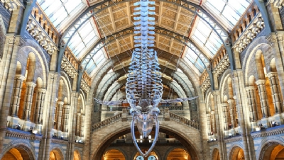 Natural History Museum declares 'planetary emergency'