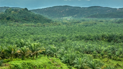Kellogg's revamps deforestation and palm oil policies after environmental protests