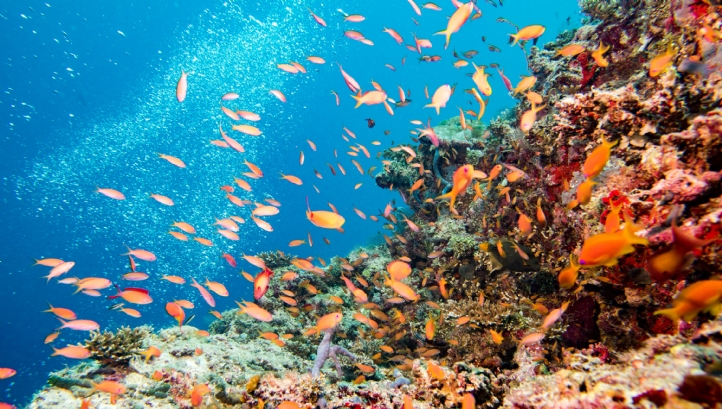 The technology has already rebuilt three hectares of reef habitat near Indonesia