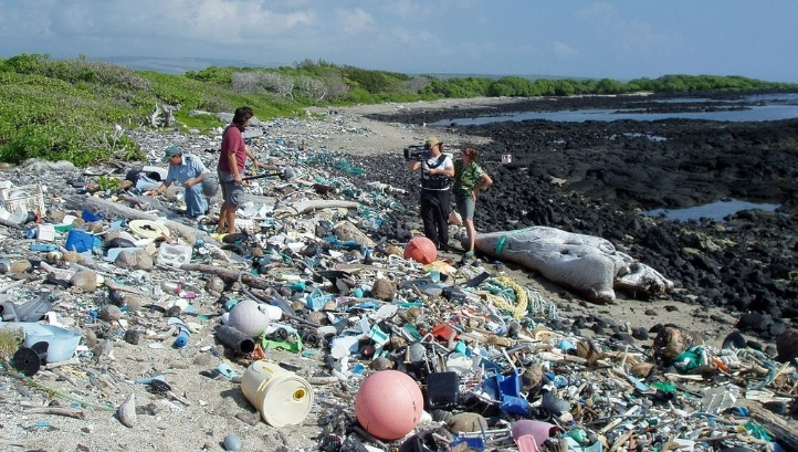Between eight and 12 million tonnes of plastic is believed to seep into the oceans each year