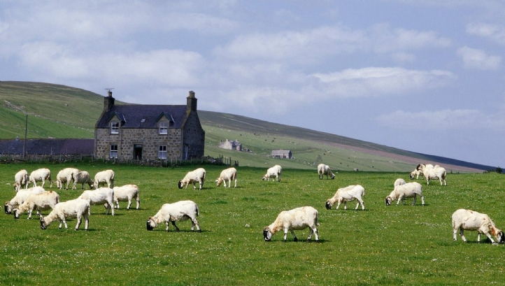 £45m worth of losses were recorded in the sheep sub-sector alone during the 12-month period