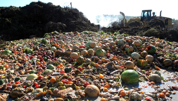 Last year, 10.2 million tonnes of food were wasted in the UK