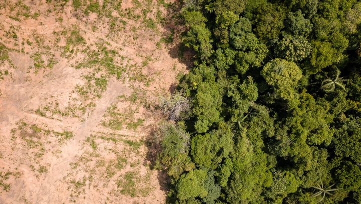 Research suggests that 3.6m hectares of tropical forest were cleared in 2018 – equivalent to the size of Belgium