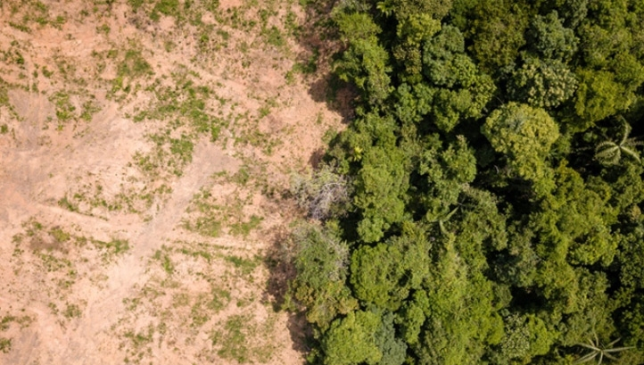 Around 3.6m hectares of tropical forest are estimated to have been cleared in 2018 – equivalent to the size of Belgium