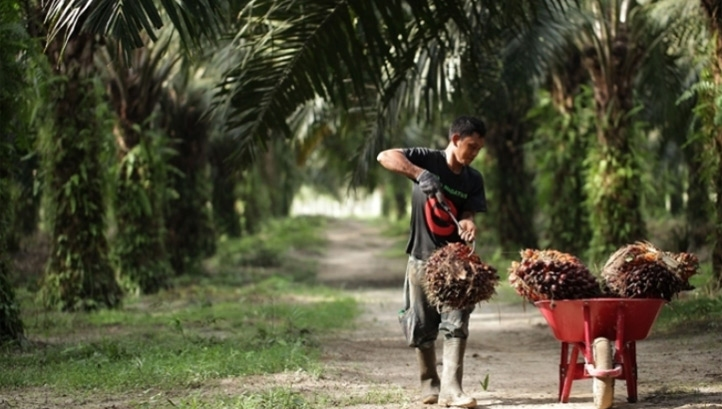 Each of the companies assessed are exposed to one or more so-called 'Forest Risk Commodities', including soy, timber, cattle and palm oil (pictured)