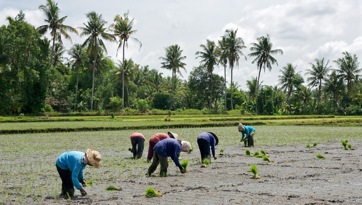 G20 leaders have been urged to work with governments where low-income suppliers and growers are located to agree on furlough schemes that protect farmers from poverty