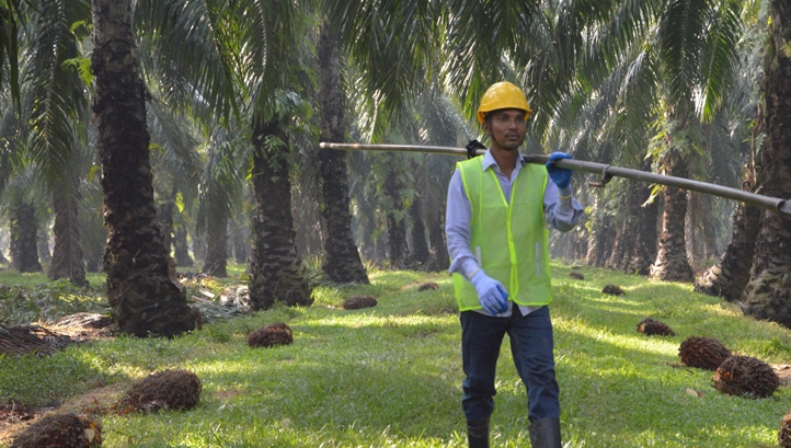 Mars is also taking steps to improve human rights across the palm oil supply chain