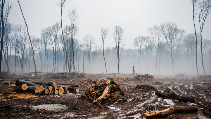 Some of the world's largest banks have been linked to industries that are causing mass deforestation and biodiversity loss