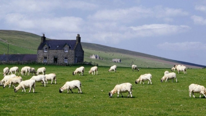 Pictured: A sheep farm in Scotland
