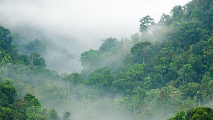 The LEAF initiative aims to mobilise at least $1bn to support emissions reductions by ensuring tropical forests that act as carbon sinks are protected from deforestation