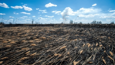 Banks and agribusiness linked to biodiversity loss