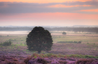 Pictured:Roydon Common Nature Reserve
