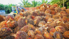 Malaysian and Indonesian companies dominate global palm oil production, but have been linked to deforestation and slash-and-burn clearance methods