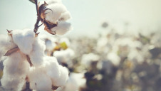 Campaigners are calling on failing companies to set time-bound targets to source 100% sustainable cotton and report publicly on progress to stakeholders
