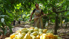 Mondelez's cocoa scheme has worked with 142,000 farmers and 1,400 communities