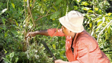 <p>Wall's has already reached 40,000 people across 76 Madagascan villages through its programmes for vanilla farmers</p>