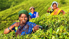 Unilever estimates that more than one million people are supported financially by its tea supply chains. Image: Unilever