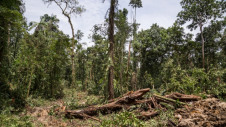 Pictured: Logging operations in Pomio, New Britain, Papa New Guinea, to make way for agri-food. Image: Fabio Erdos / Panos