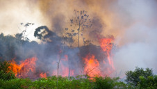 Brazil's National Institute for Space Research (INPE) states that there has been a total of 72,843 fires in Brazil this year