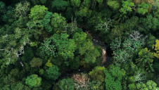 The Brazilian Amazon lost 1,114.8 sq km (430 sq miles) – an area equivalent to Hong Kong – in the first 26 days of August