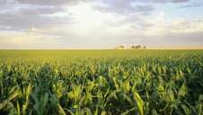 Of the freshwater used by humanity each year, 70% is attributable to agriculture. Image: Cargill