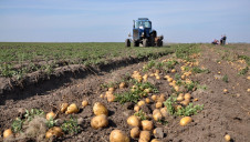 McCain is also supporting British potato growers from the impacts of Covid-19