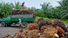 Commodities covered by the coalition include palm oil (pictured), soy and forest products like wood and paper