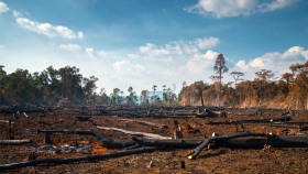 Deforestation is believed to have accelerated amid Covid-19, and green groups are concerned that new legislation could make the problem worse still